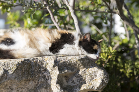 Cute female cat resting on a piece of rock Stock Photo
