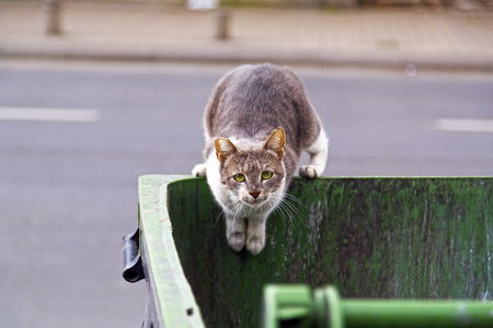 Homeless cat seeking food in a garbage bin, looking at the camera