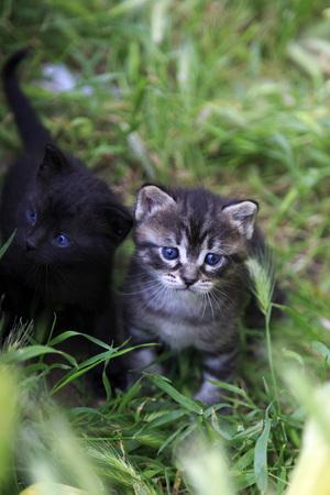 pezones: Dos gatitos recién nacidos, gatos rayados grises y negros del bebé en hierba Foto de archivo