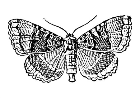 Vintage engraving style vector illustration of a beautiful butterfly