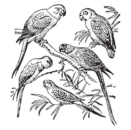 Vintage engraving style vector illustration set of parrot types