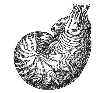Vintage engraving style vector illustration set of shelled marine creatures, gastropods Ilustração