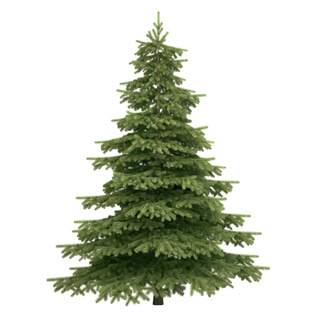 fir: Spruce tree isolated on white. Stock Photo