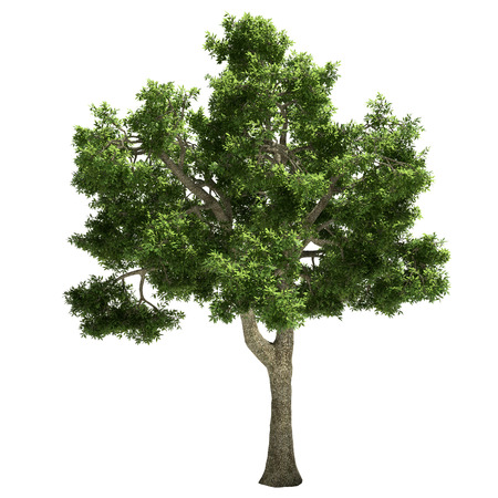 ide: Ide tree isolated on white.