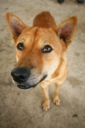 sweetest: Brown dog with the sweetest eyes smiling at me