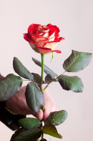 Red rose with two weddings rings on a bud photo