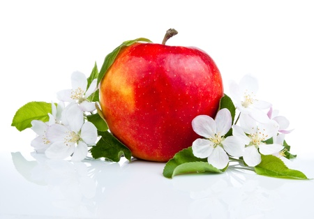 big apple: One Juicy Red Apple and flowers on a white background