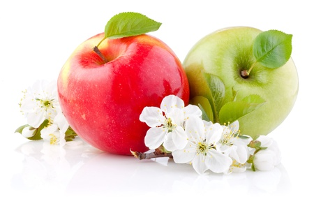 Two red and green apples with leaves and flowers on a white background
