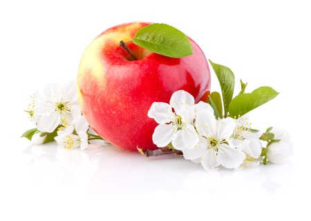 apple blossom: Single Red Apples with Leaf and Flowers isolated on a white background