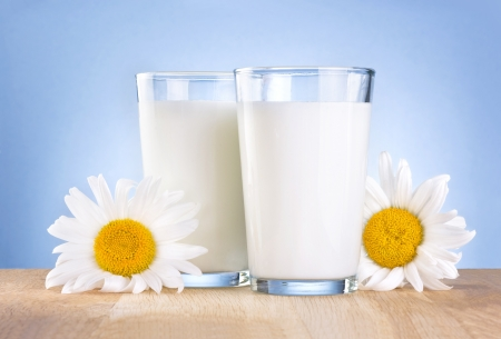 Two Glass fresh milk and chamomile flowers is wooden table on a blue background photo