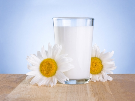 Glass fresh milk and two chamomile flowers is wooden table on a blue background photo