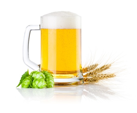 Mug fresh beer with Green hops and ears of barley isolated on a white background photo