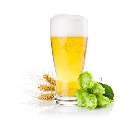 Glass of fresh beer with Green hops and ears of barley isolated on a white background Standard-Bild