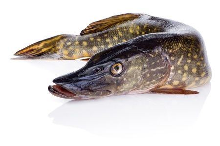 pike: Fresh fish pike Isolated on white background