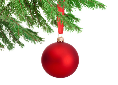 Christmas red ball hanging on a fir tree branch Isolated on white background Фото со стока