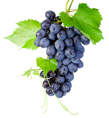 green and purple vegetables: Fresh bunch of grapes with leaves isolated on a white background