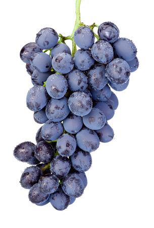 grape juice: Fresh wet blue grapes isolated on white background Stock Photo