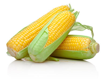 Three corn cob isolated on a white background