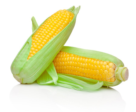 Two fresh corn cobs isolated on a white background Фото со стока