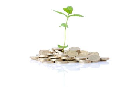 sterlina: concetto di nuova crescita denaro un impianto in erba che cresce in monete isolato su sfondo bianco Archivio Fotografico