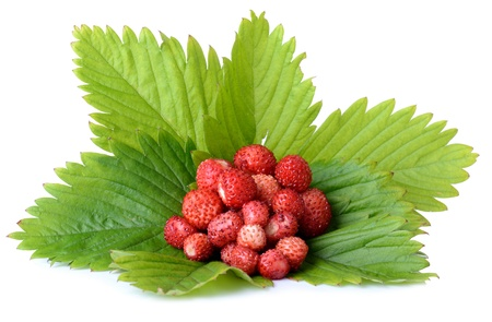 juicy wild strawberrys on strawberry leafs isolated on white Stock Photo - 21172229