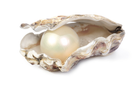 conchas: El concepto de riqueza o de ganar con una concha de ostra abierto con una gran perla en el interior aislado en un fondo blanco