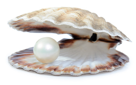 pearl jewelry: finding a nice surprise a pearl in a shell isolated on a white background
