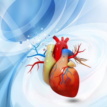 heart pain: Human heart