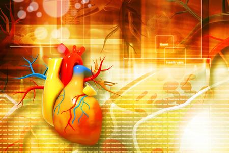 Digital illustration of human heart illustration