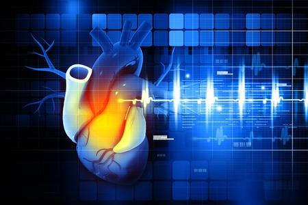 medical scans: Human heart