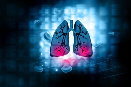 inhale: Human lungs Stock Photo