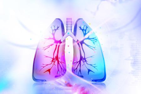 Human lungs Archivio Fotografico