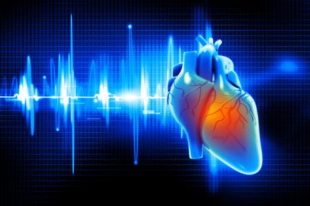 human heart: Ilustración digital del corazón humano