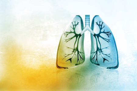 Human lungs Stockfoto