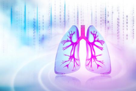 Human lungs Zdjęcie Seryjne