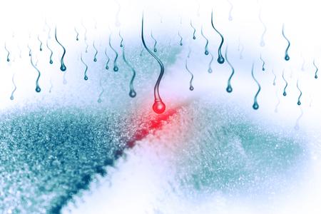 sex chromosomes: sperm and egg cell