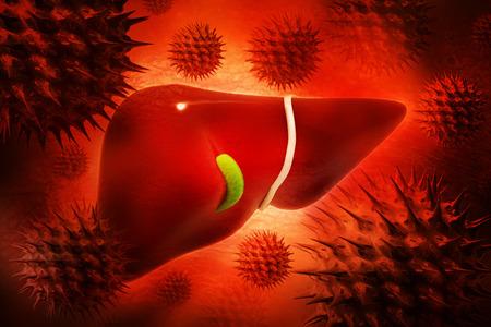 Human liver Stock Photo