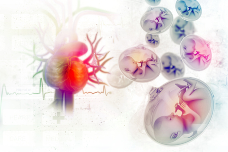 Human fetus in scientific Banque d'images