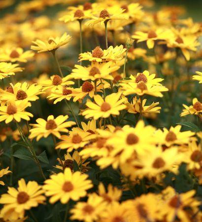 blumen: Meadow Stock Photo