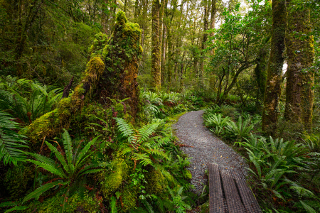 Track at Lake Marian fall located in the Fiordland National Park, Milford sound, New Zealand