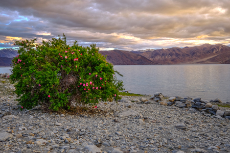 Landscape around Pangong Lake in Ladakh, India