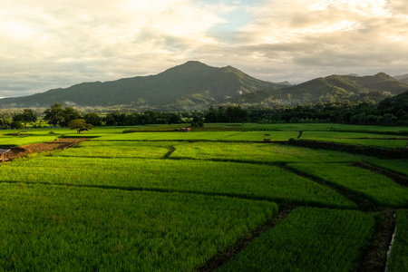 Green rice plantation in Nan province, Northern Thailand