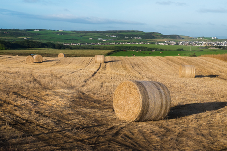 Round bales,A harvested hay, located outside of Bushmill, Northern Ireland