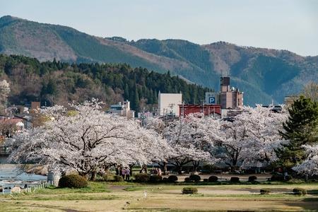 Full bloom cherry blossoms in Takayama city, Japan. area between Miyagawa river and Enakogawa river including Miyagawa Ryokuchi Park .