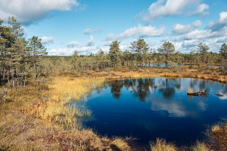 The landscape around walking path of Viru bog, one of the most accessible bogs in Estonia, Located in Lahemaa National Park