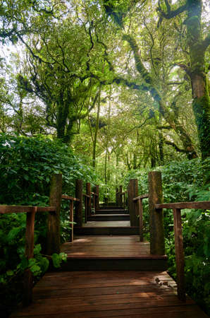 A wooden walkway through the forest at Doi Inthanon national park, Chiangmai province, Thailand