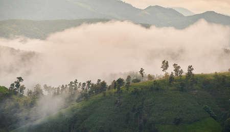 The morning mist at Pa Bong Piang rice field in Chiangmai, Thailand 免版税图像