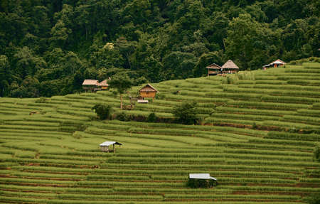 The landscape of Pa Bong Piang rice field in Chaingmai, Thailand 免版税图像