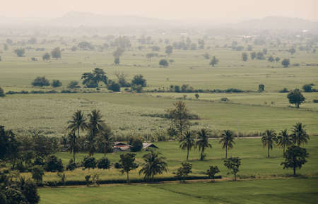 The landscape of rice field in Kanchanaburi province, Thailand