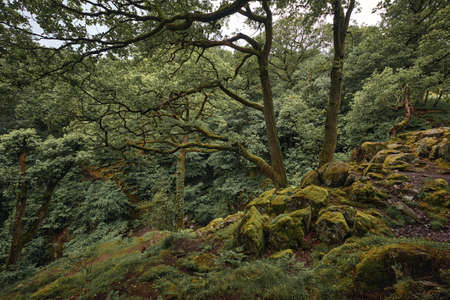 The landscape of forest near Ullswater in Lake district, United Kingdom